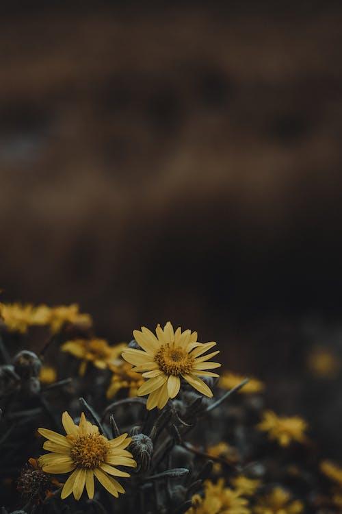 Imagine de stoc gratuită din adâncime de câmp, atenție superficială, creștere, delicat