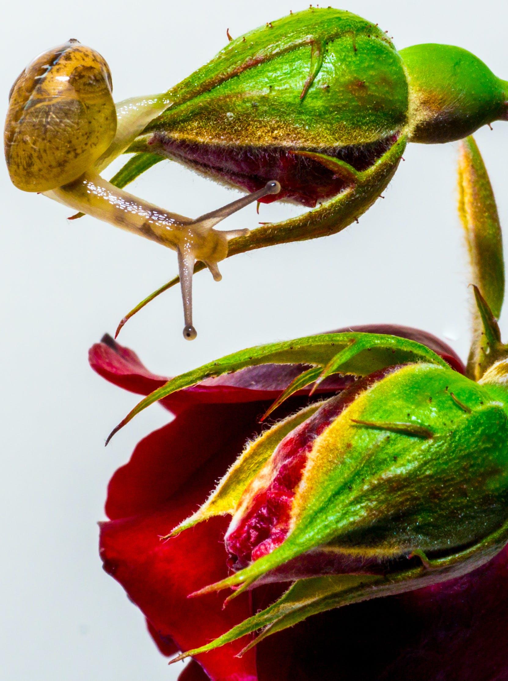 slug, snail