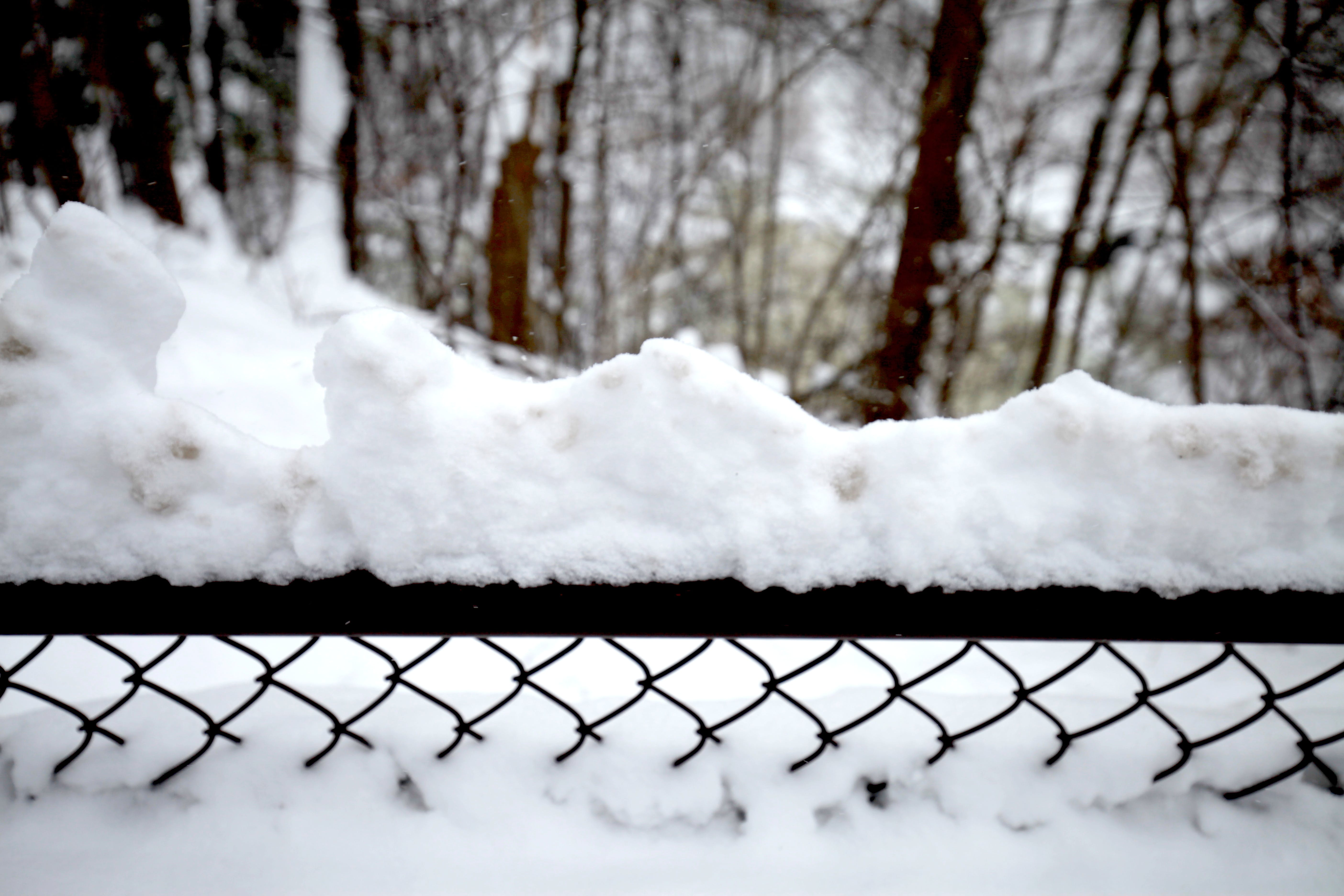 Free stock photo of #SnowAdornedFence