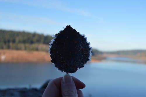 ナチュラル, 人工湖, 凍った湖, 凍った葉の無料の写真素材
