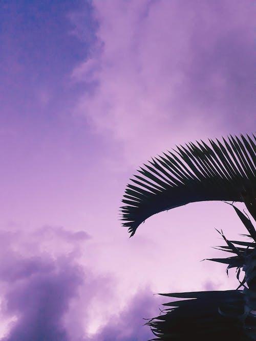 Foto stok gratis alam, awan, bayangan hitam, berawan
