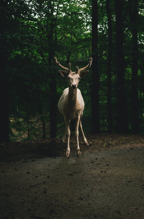 Photos gratuites de 50mm, animal, campagne, cerf
