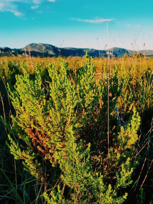 Foto stok gratis alam, dari dekat, gunung biru, pegunungan