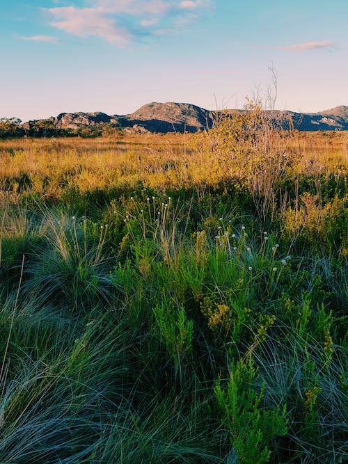 Foto stok gratis alam, matahari, perjalanan, taman nasional