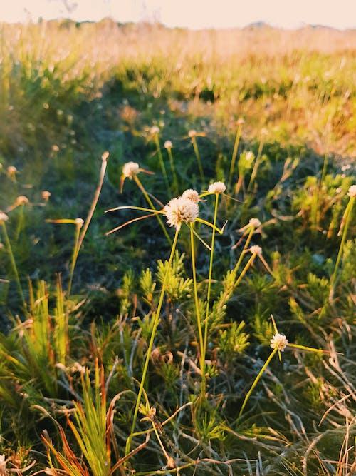 Foto stok gratis alam, dari dekat, matahari terbenam, tumbuh-tumbuhan