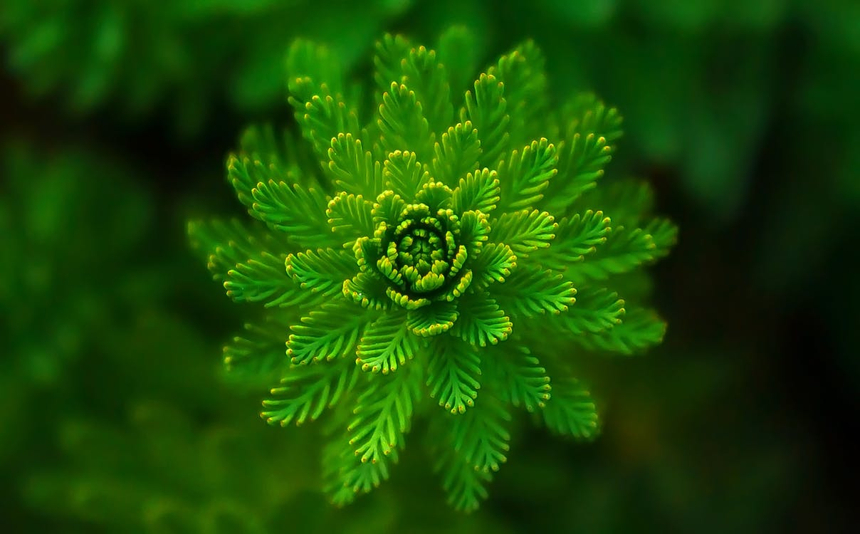 Selektiver Fokus Der Grünen Blatt Pflanzen Fotografie