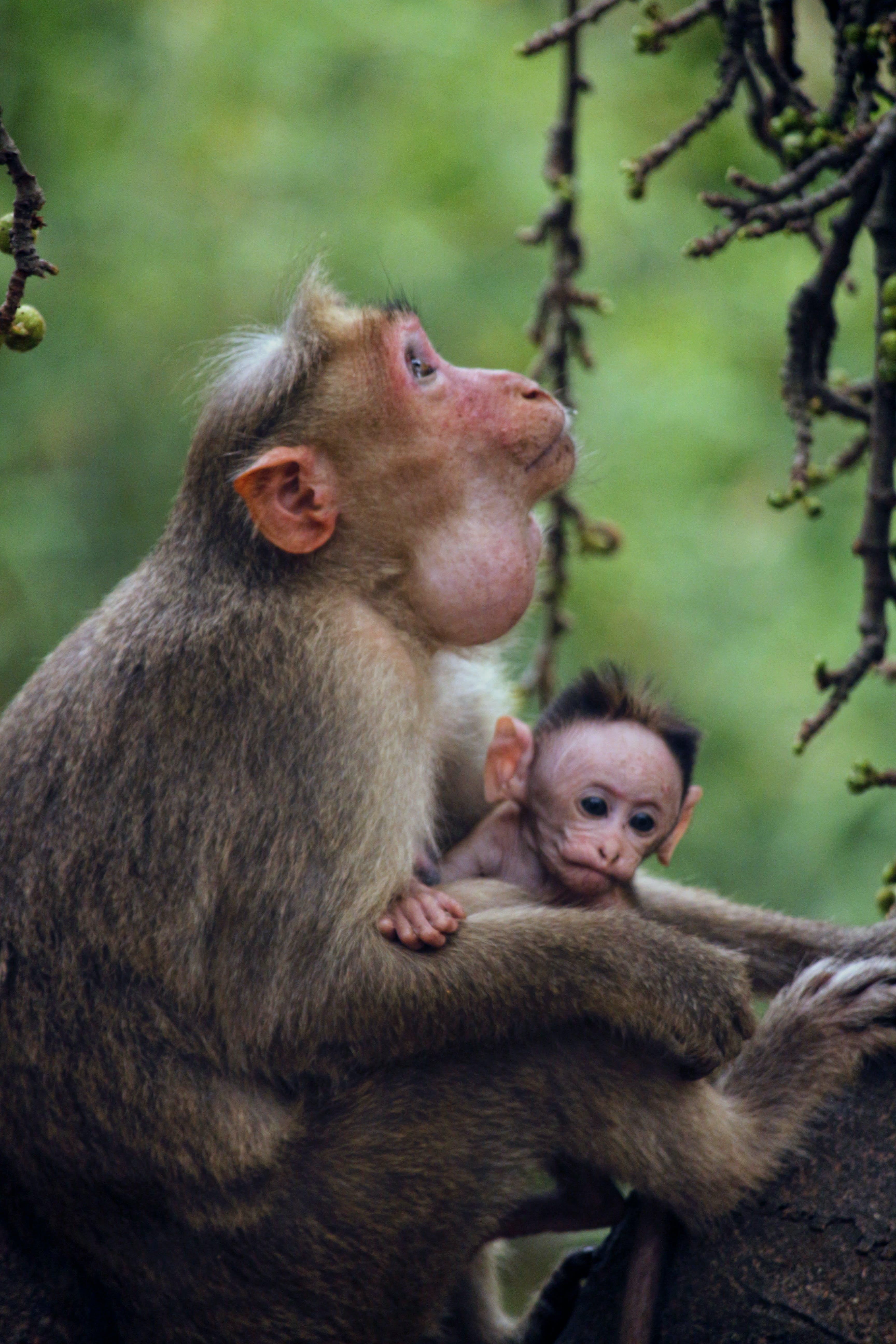 Free stock photo of animal, baby, care, child