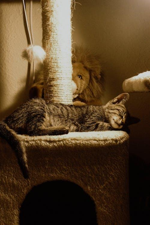 Brown Tabby Cat Lying on Cat Tree