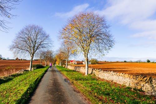 Free stock photo of asphalt road, autumn trees, beauty of nature, blue skies