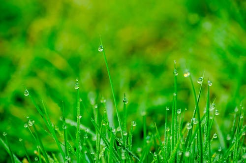 Macro Photography of Green Grass Field