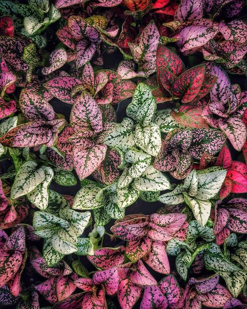 Fotobanka sbezplatnými fotkami na tému farby, flóra, hlúpe trstiny, krásny