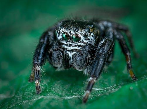 Macro Photo of Black Spider