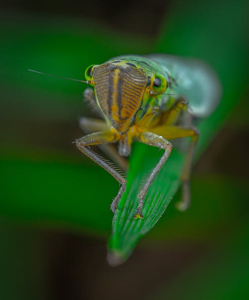 Close-Up Photo of Green Grasshopper