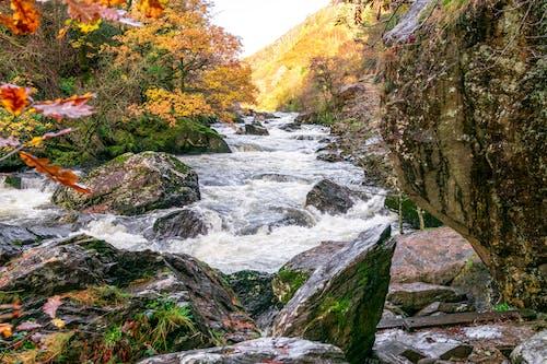 Free stock photo of autumn trees, boulders, creek, fallen leavers