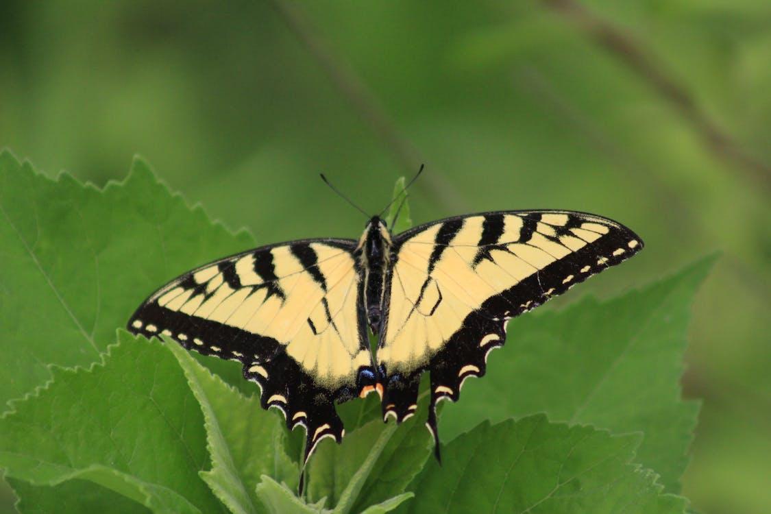 Immagine gratuita di cimici, farfalla, insetti