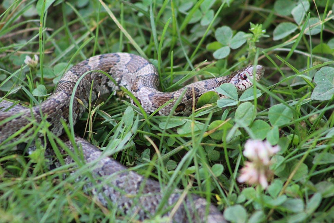 Immagine gratuita di animali, natura, serpente