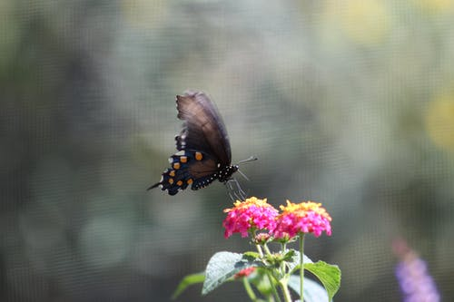 Free stock photo of bugs, butterflies, butterfly, butterfly on a flower