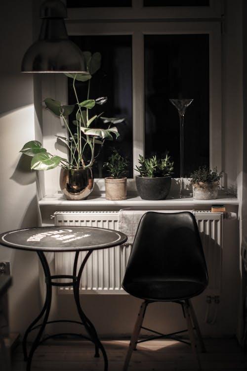 คลังภาพถ่ายฟรี ของ การตกแต่งภายใน, การออกแบบตกแต่งภายใน, พืชประดับ, พืชประดับในบ้าน