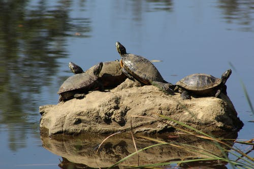 Photos gratuites de tortue, tortues