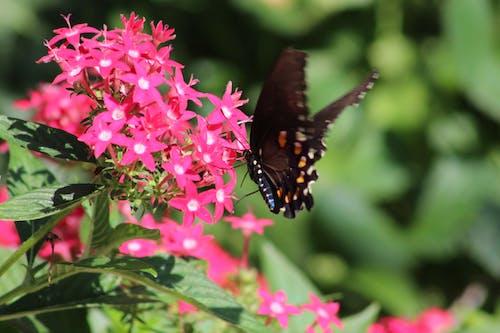 Immagine gratuita di cimici, farfalla, farfalla su un fiore, farfalle