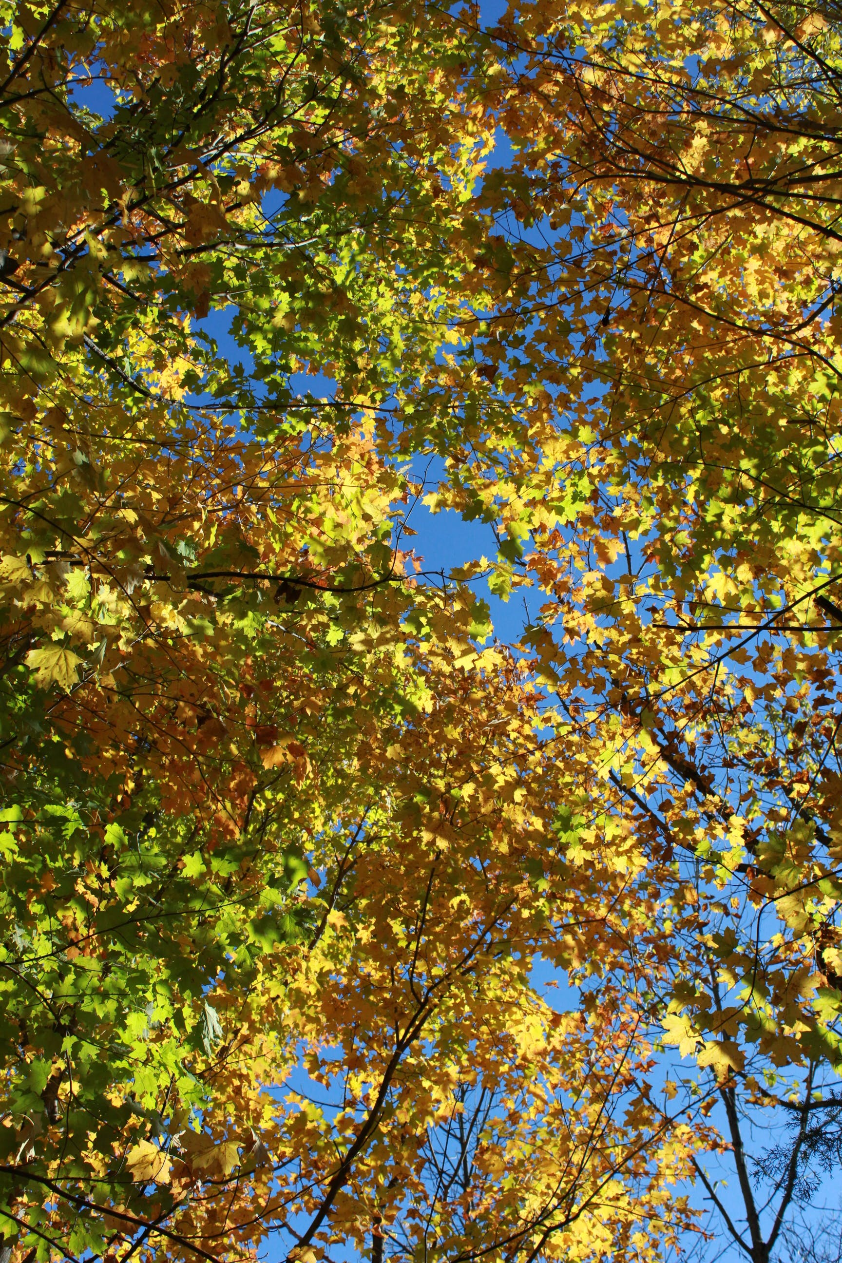 Free stock photo of autumn, fall, leaves, trees