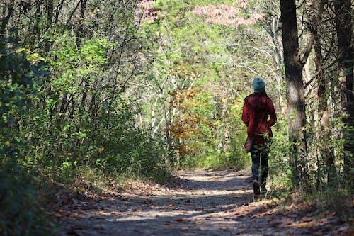 Immagine gratuita di camminando, natura, passeggiata nella natura