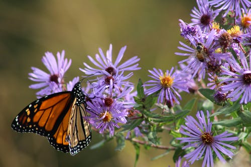 Free stock photo of butterfly, butterfly on a flower