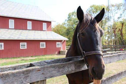 Immagine gratuita di azienda agricola, cavallo, fattoria, granaio