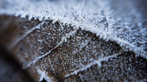 Kostenloses Stock Foto zu makro, schnee