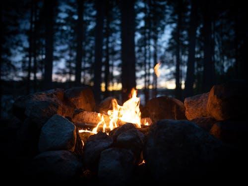 Kostenloses Stock Foto zu baum, campen, camping, feuer