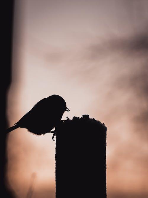 Kostenloses Stock Foto zu dunkel, sonnenuntergang, vogel