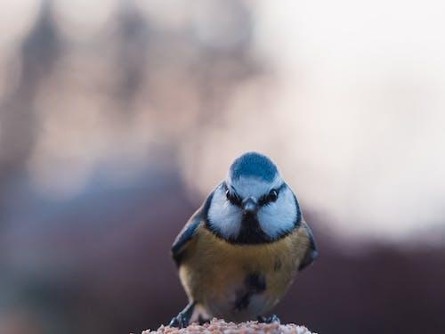 Kostenloses Stock Foto zu bokeh, tier, vogel