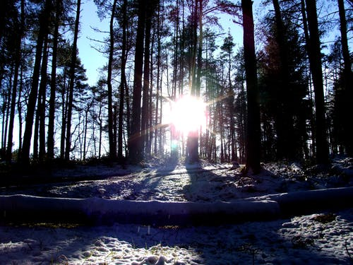 Free stock photo of Winter in the forrest