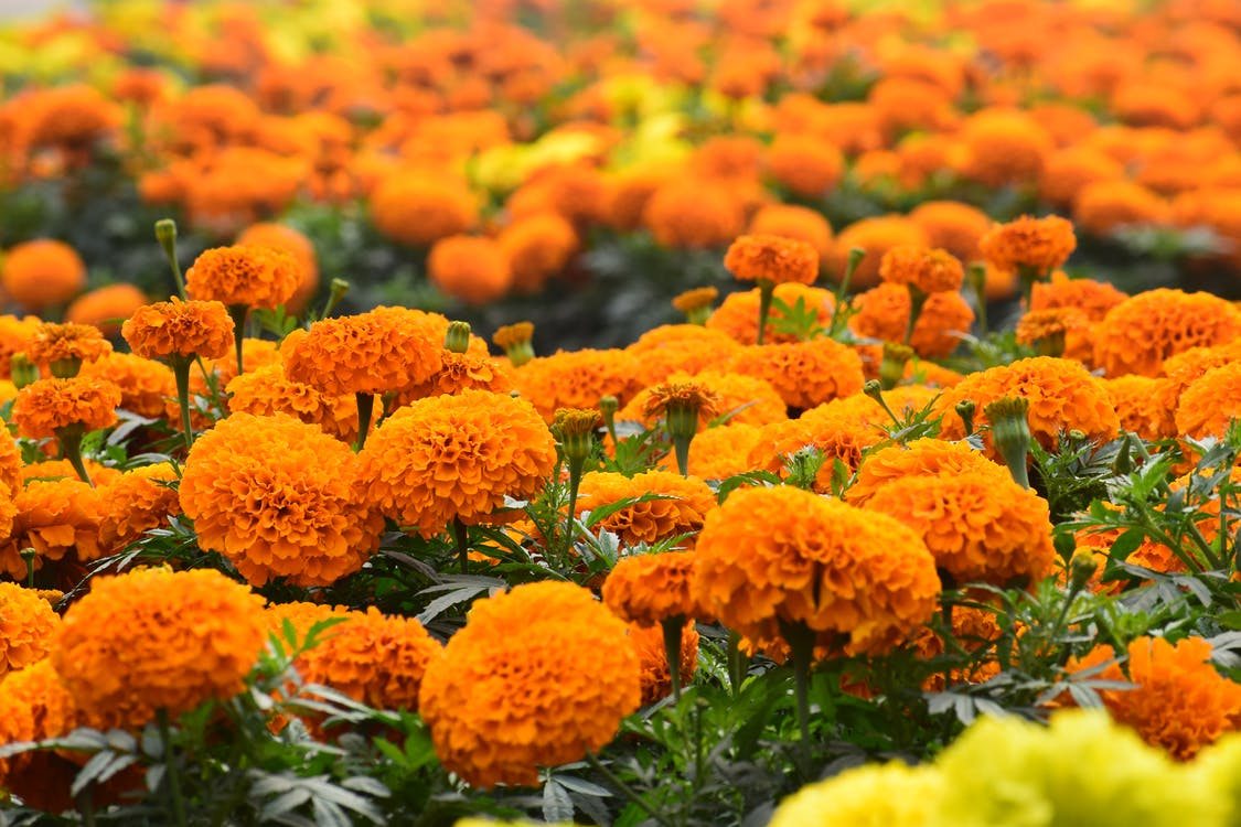 Orange Flowers With Green Leaves