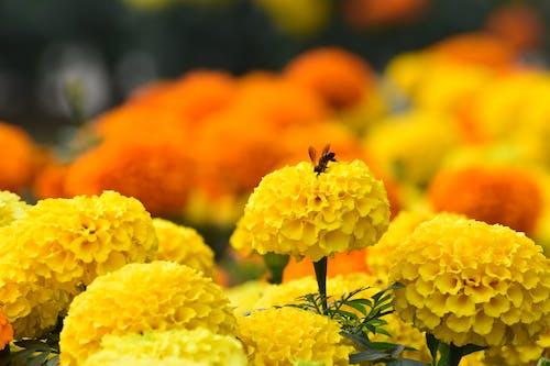 Free stock photo of bouquet of flowers, honey bees, honeybees