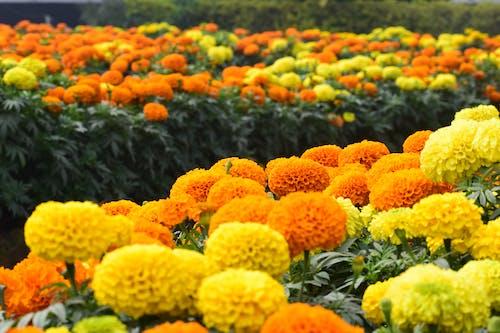 Безкоштовне стокове фото на тему «Вибірковий фокус, глибина різкості, делікатний, жовті квіти»