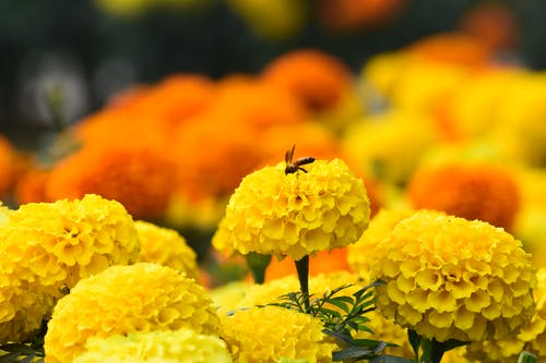 Free stock photo of beautiful flowers, beeswax, honeybees