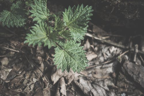 Free stock photo of brown, forest floor, green, life