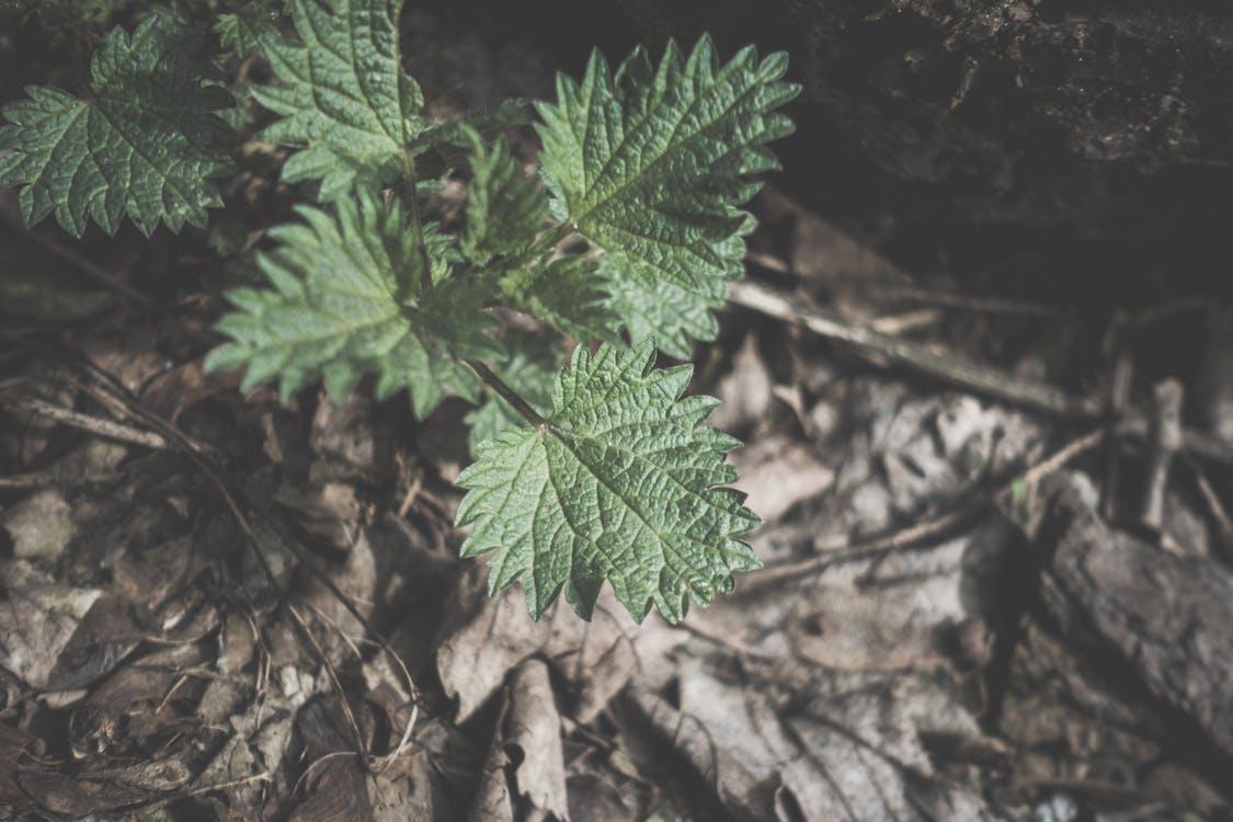 hnědá, lesní půda, příroda