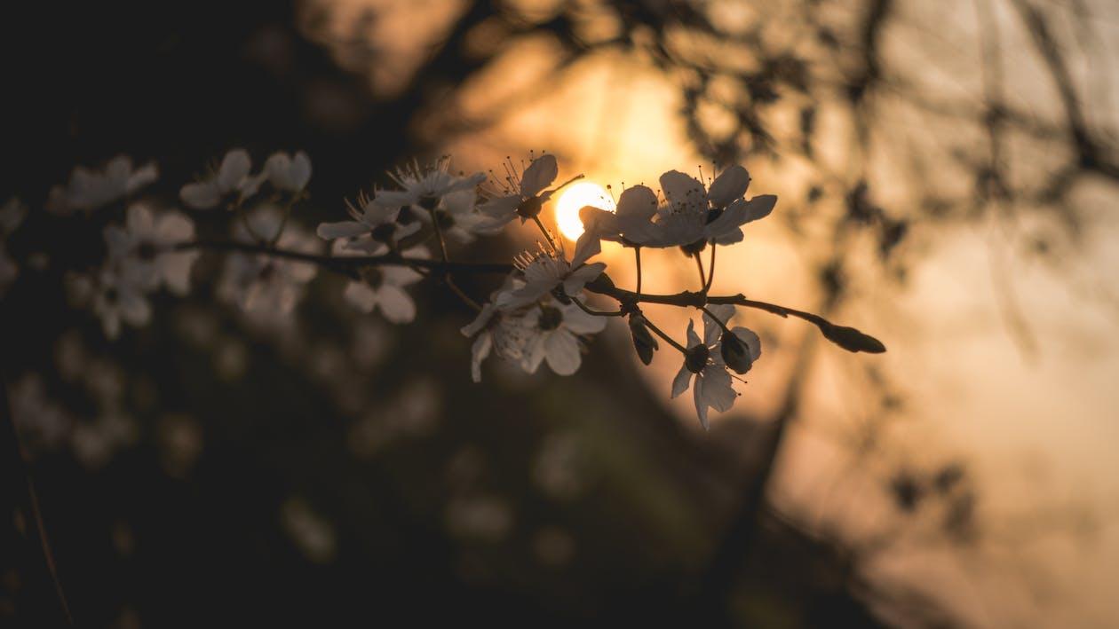 ambiance, arbre, blanc