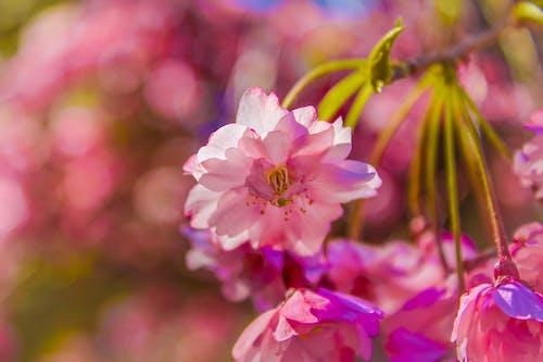 ağaç, bitki, bulanıklık, büyüme içeren Ücretsiz stok fotoğraf