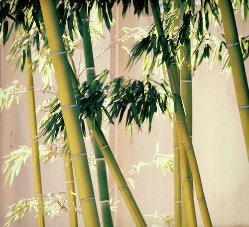 Free stock photo of asia, design, diana westberg
