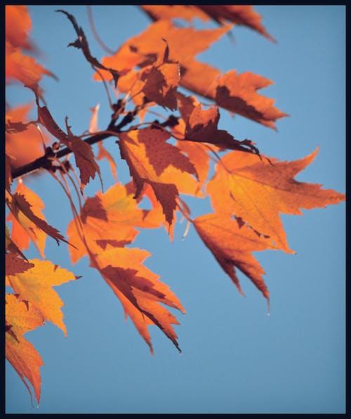 Free stock photo of blue skies, blue sky, diana westberg