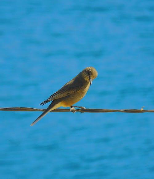 Free stock photo of birdie, birds, photography