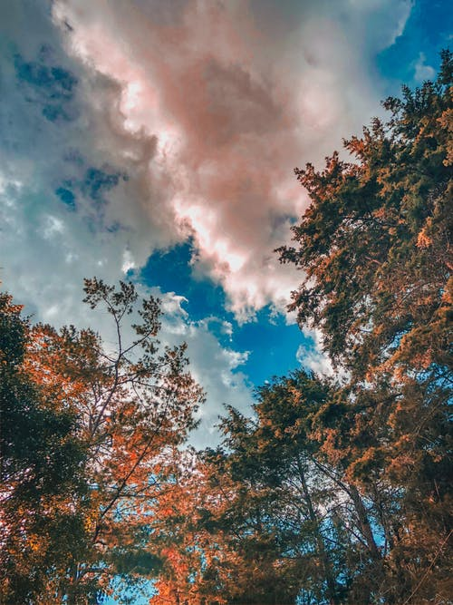Free stock photo of afternoon, beautiful sky, branch, cloud forest