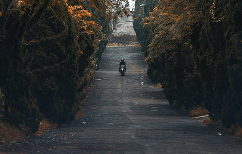 Person Riding Motorcycle Surrounded by Trees