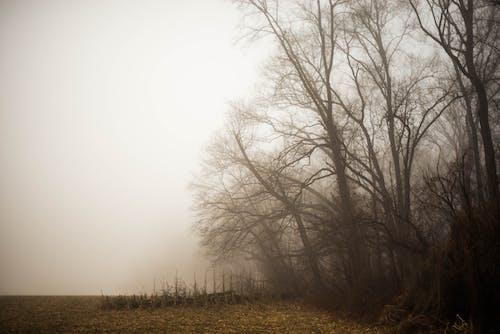 Immagine gratuita di alberi, alberi nebbiosi invernali, mattina nebbiosa, nebbioso