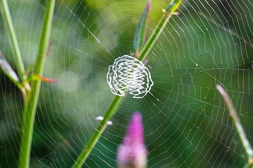 คลังภาพถ่ายฟรี ของ ธรรมชาติอันยิ่งใหญ่, แมง, ใยแมงมุม