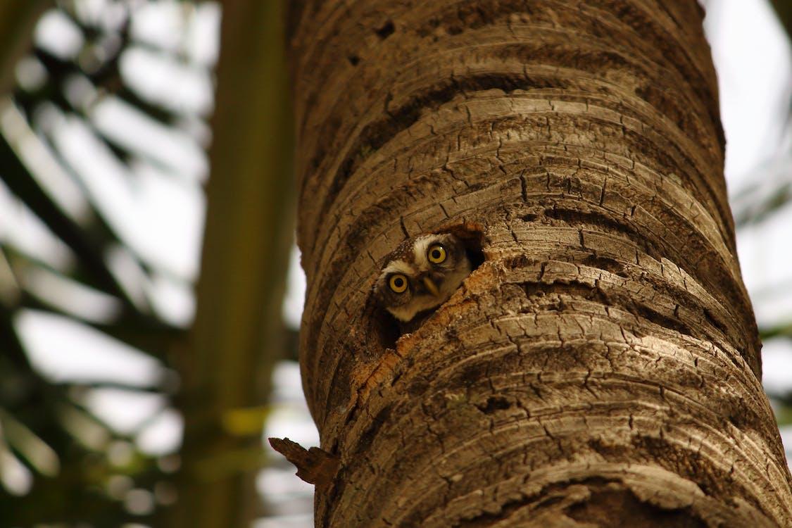 Brown Owl on Brown Tree Trunk