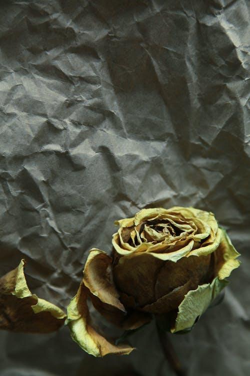 Foto stok gratis bunga, di, kertas, kuning